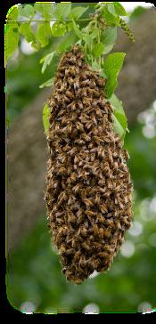aaaaa_swarm_cropped
