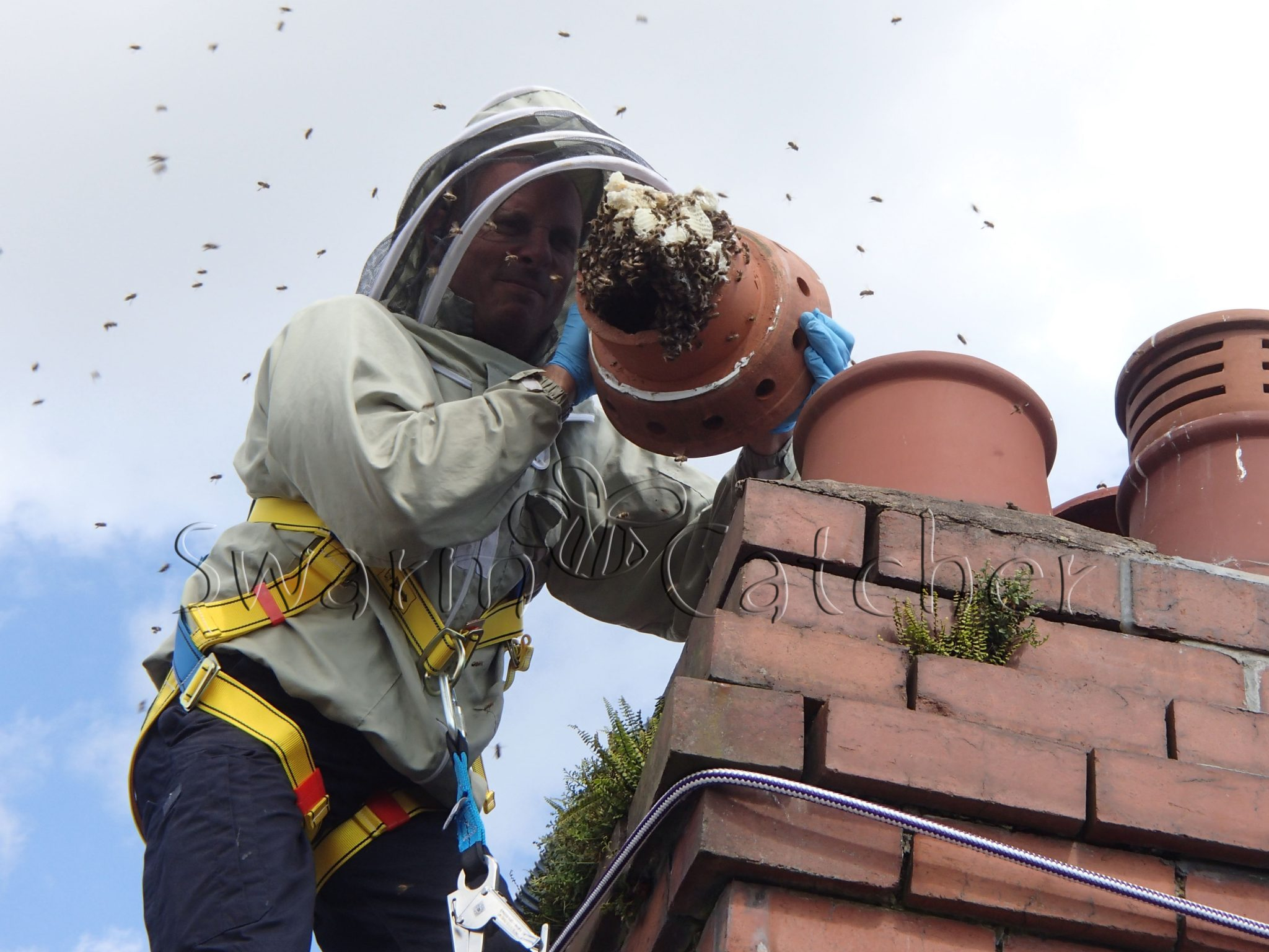 Honey bees Live honey bee colony removal of honey bees in chimney - Cardiff