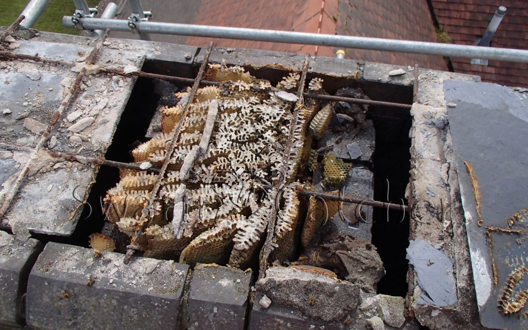 Removing Bees in a Chimney
