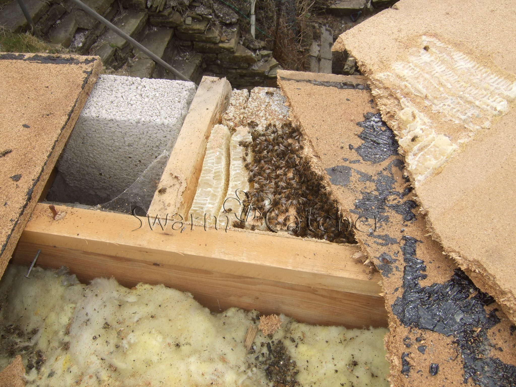 Honey bee cutout - flat roof