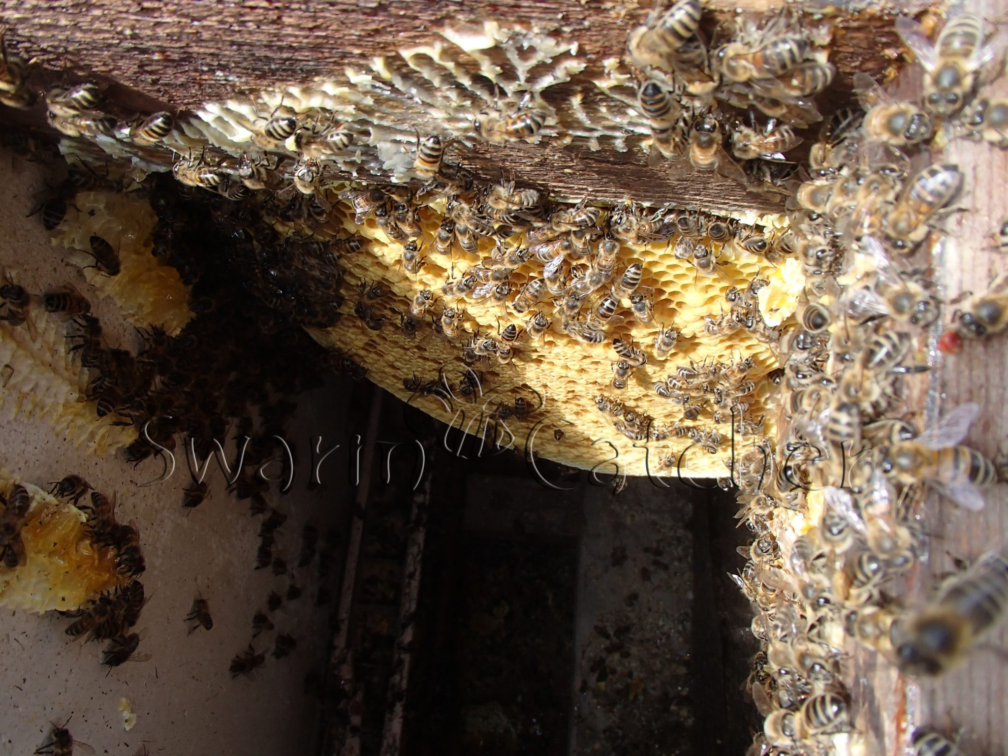Bee Rescue and Conservation