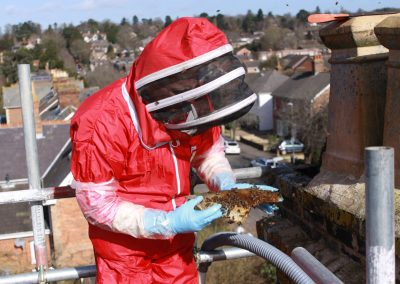 Honey bee removal from chimney - Dorset_4