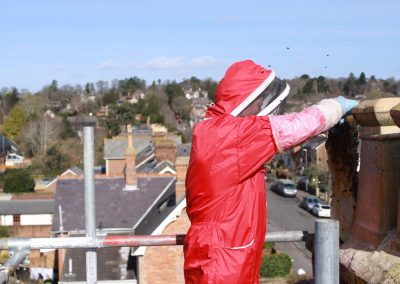 Honey bee removal from chimney - Dorset_5