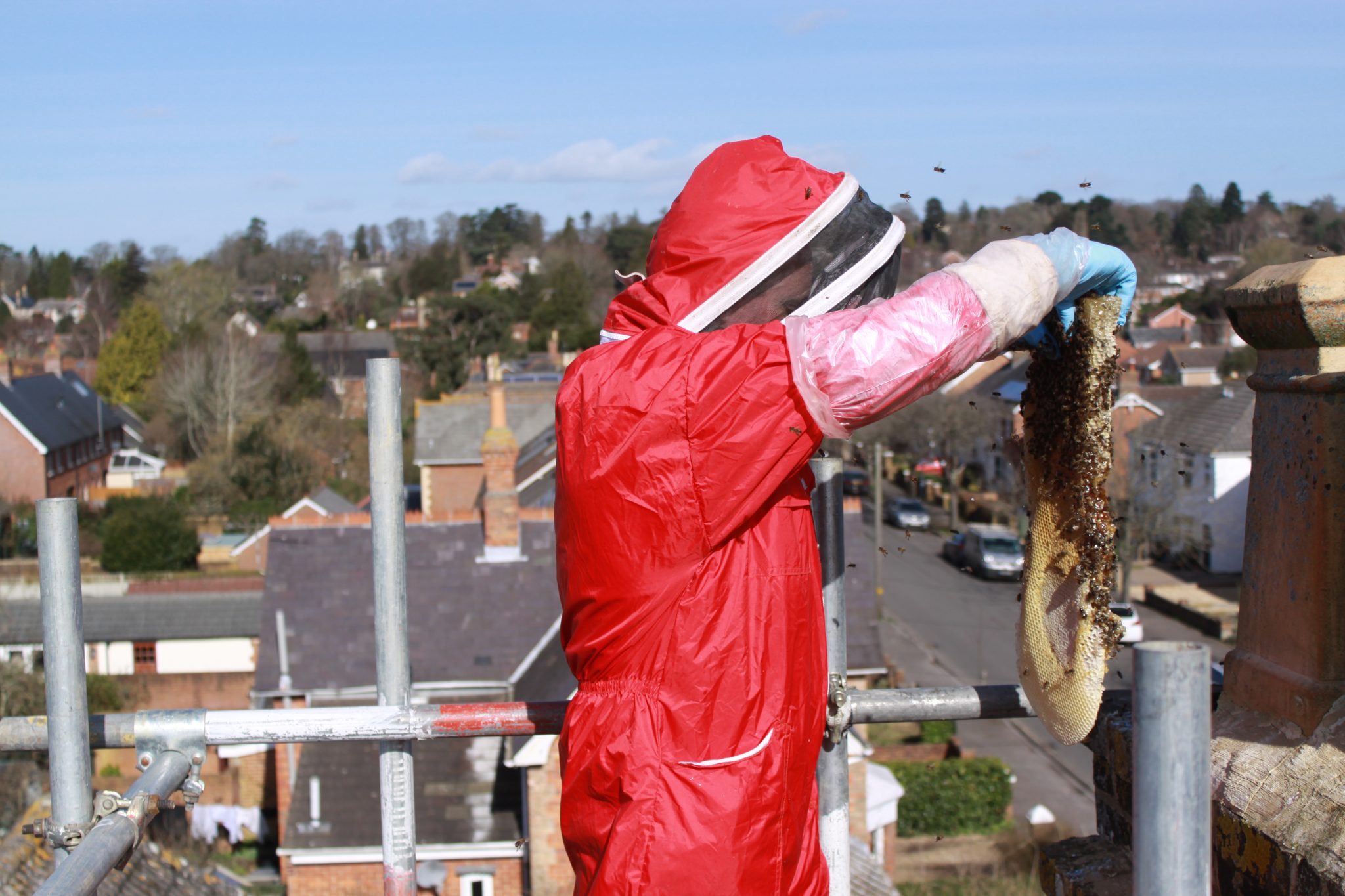 Honey bee removal from chimney - Dorset_6