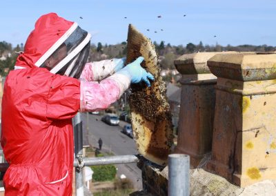 Honey bee removal from chimney - Dorset_7