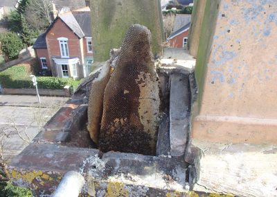 Honey bee removal from chimney - Dorset