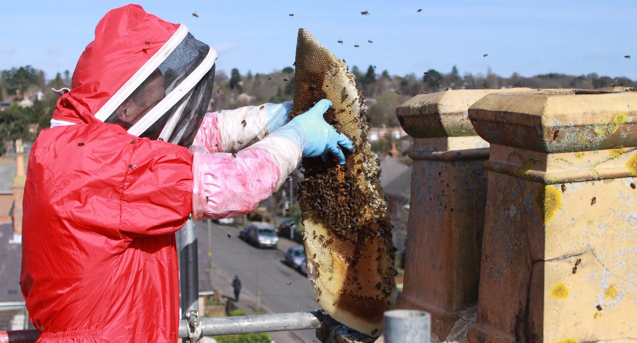 Swarm Catcher Honey Bee Removal