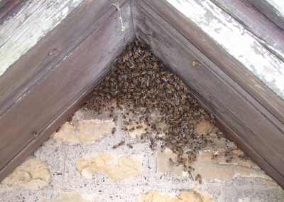 Bruton Somerset bee nest roof cutout 10
