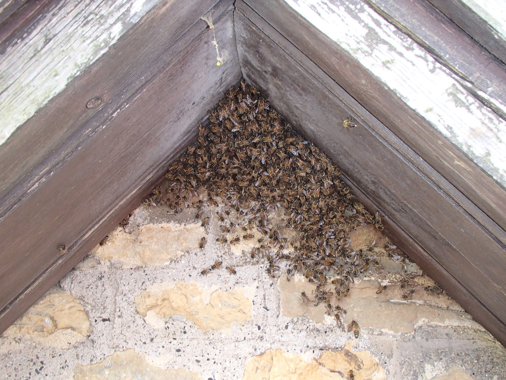 Bee Rescue And Conservation Swarmcatcher