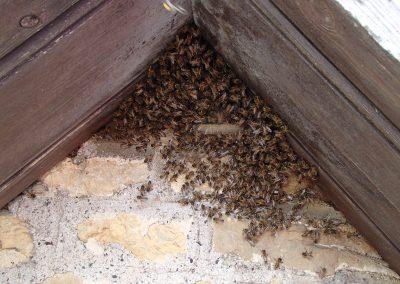 Bruton Somerset bee nest roof cutout 11