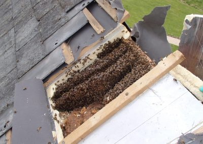 Bruton Somerset bee nest roof cutout 12
