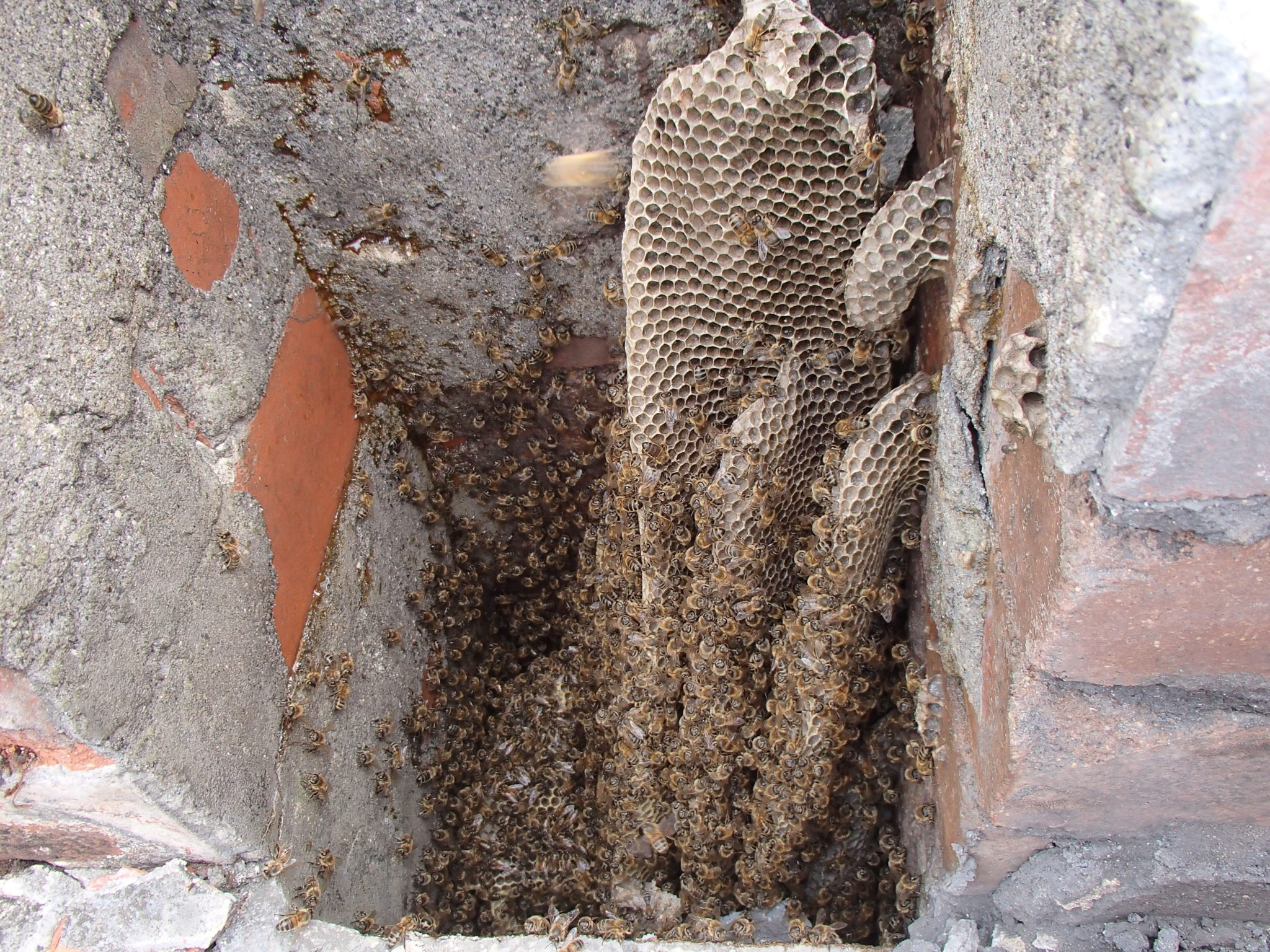 Old School House – Pyle 070717 bee nest chimney cutout 07