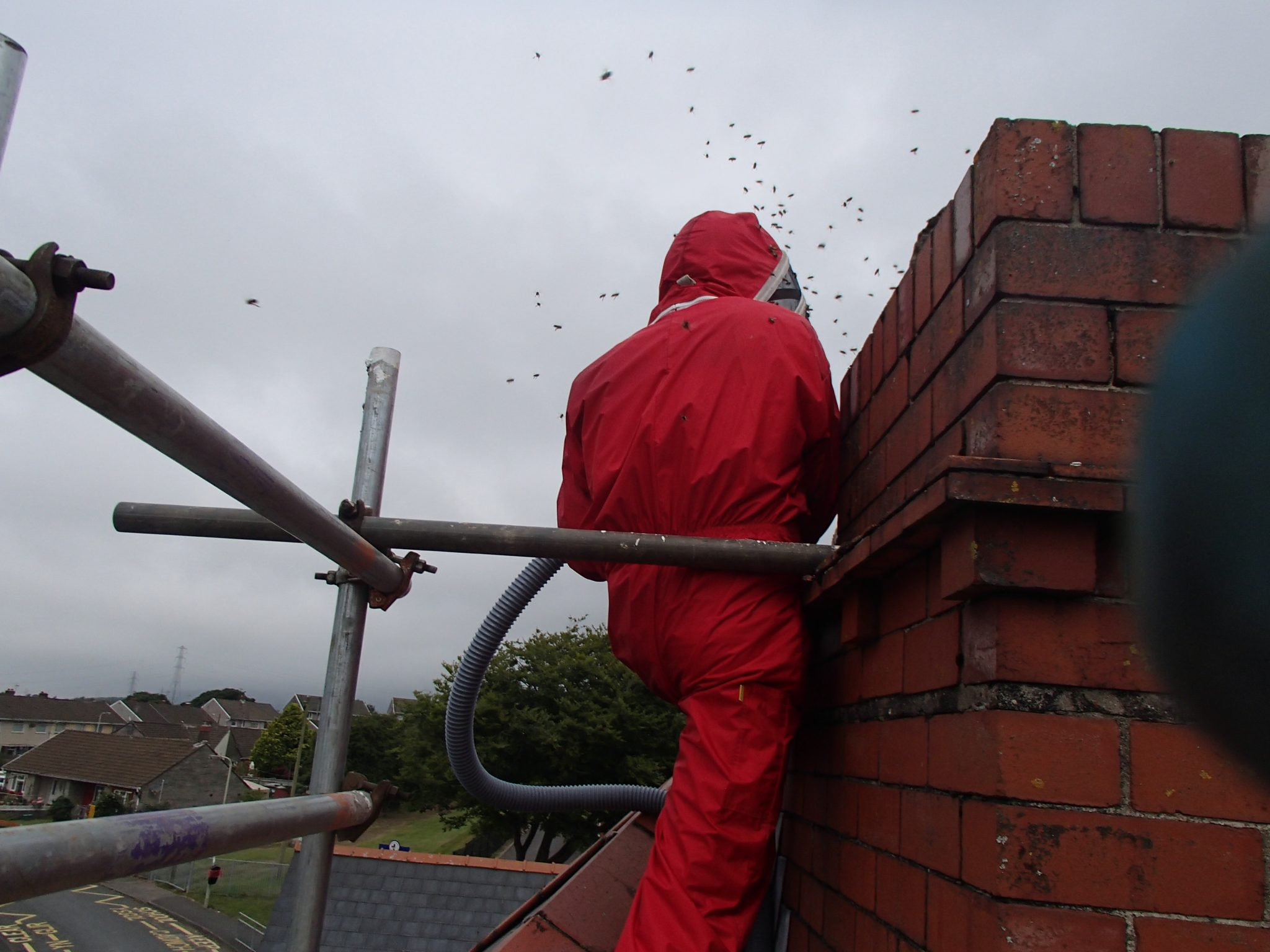 Honey bee removal from chimney - South Wales