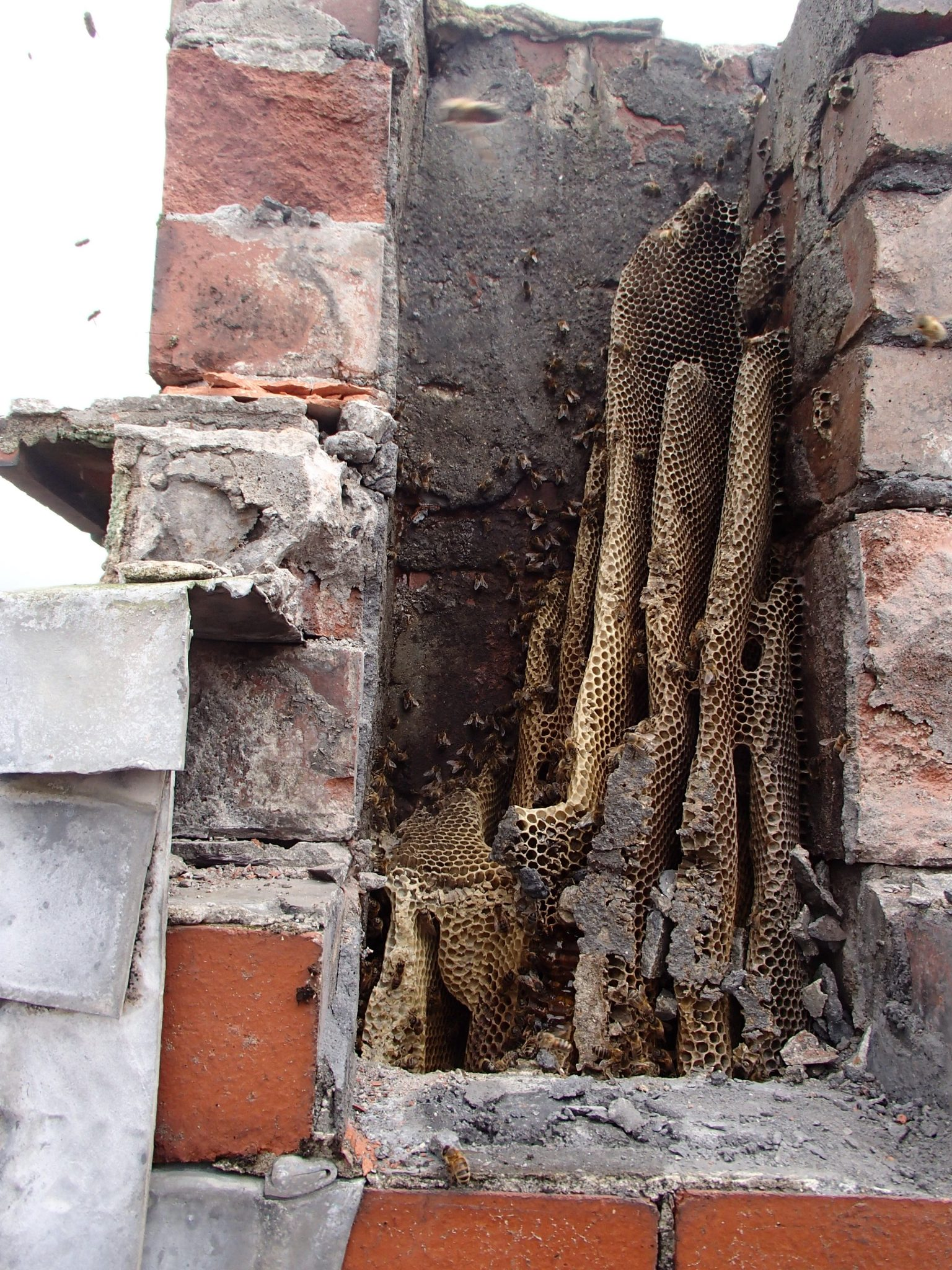 Honey Bee Removal From Chimney South Wales Swarmcatcher